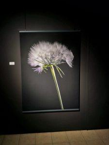 A Tribute to Flowers, FlowerArtMuseum in Aalsmeer, printed by Jan R Smit Fine Art Printing Specialist