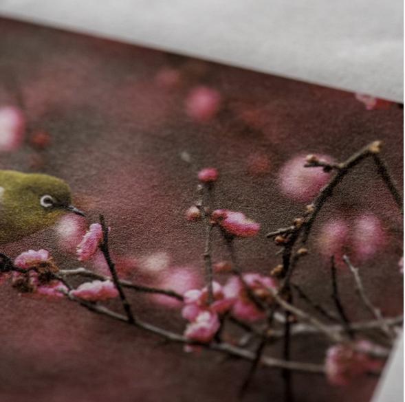 Awagami Kozo Thin 70g, Jan R Smit Fine Art Printing Specialist